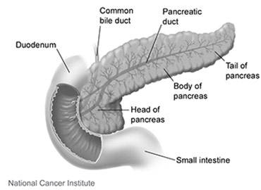 Scientists prod immune cells to attack pancreatic cancer