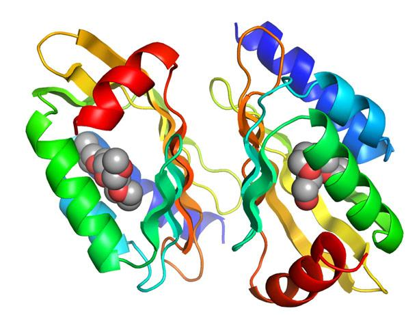illustration of a protein designed at the University of Washington
