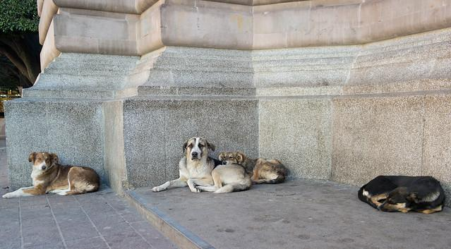 picture of stray dogs