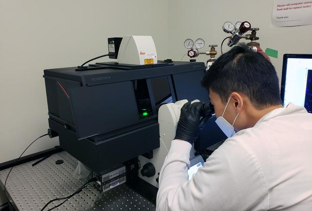 Hyeon-Jin Kim in Dr. Fowler's lab working at the microscope for visual cell sorting.