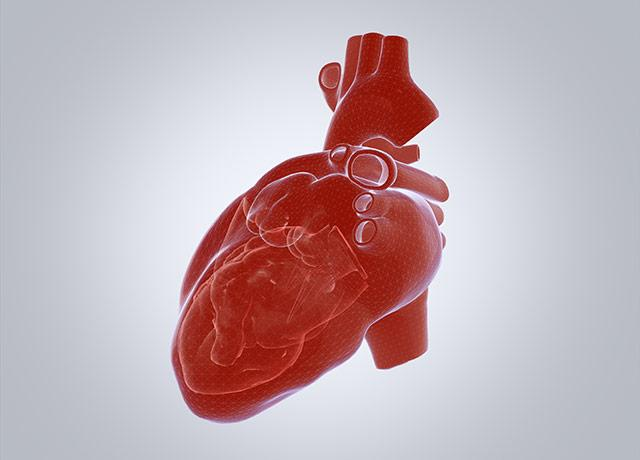 3D illustration of human heart