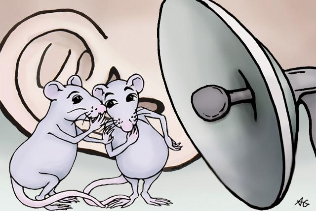 Deep learning deciphers what rats are saying