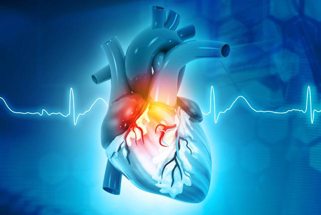 illustration of the heart anatomy