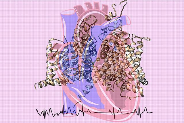 cartoon iof heart sodium channel
