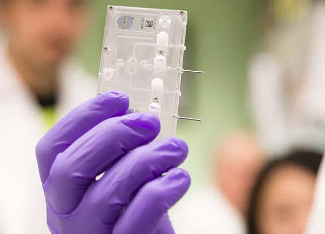 """picture of """"Kidney on a chip"""" technology"""