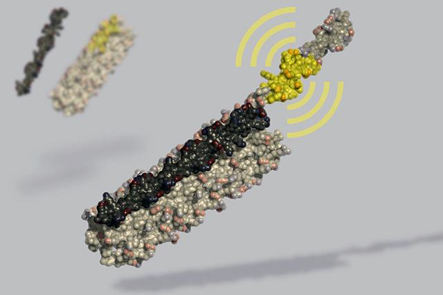 LOCKR artificial molecular switch created  from computationally designed synthetic proteins