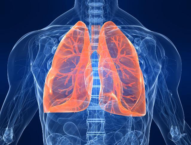 artist's conception of the lungs inside the body