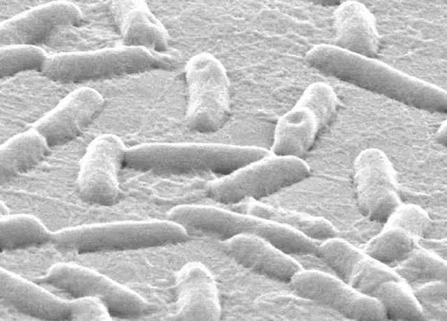 of pseudomonas bacteria on plastic