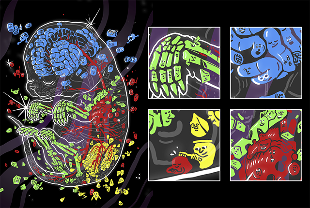 An artist's depiction depicts how sci-Space captures the personalities and localities of individual cells as they come together to form organs.