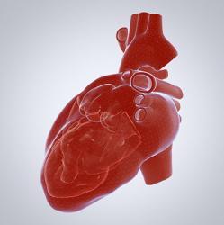 3D illustration of human heart
