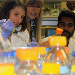 Researchers in lab studying genetic controls of early embryonic development