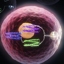 Conceptual image of cells containing protein logic gates