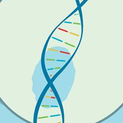 illustration of mitochondrial DNA