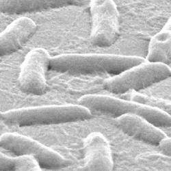 of pseudomonas bacteria on plastic