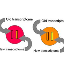 Comparing transcriptomes to reconstruct a single cells trajectory
