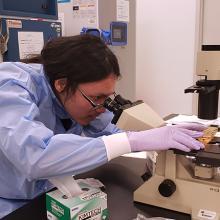 Ty Higashi examines tissues