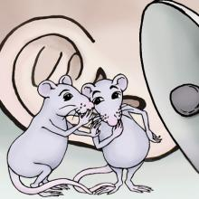 mice whispering to eachother