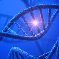 picture of a DNA strand