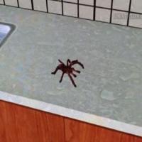 VR spider on sink