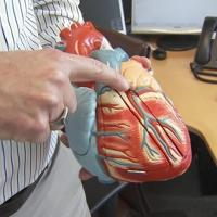 Chuck Murry showing a heart model