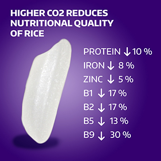 graphic of depleted nutrients in rice in study